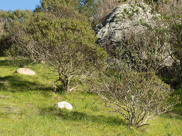 Natural Burial/Green cemtery in Golden Gate