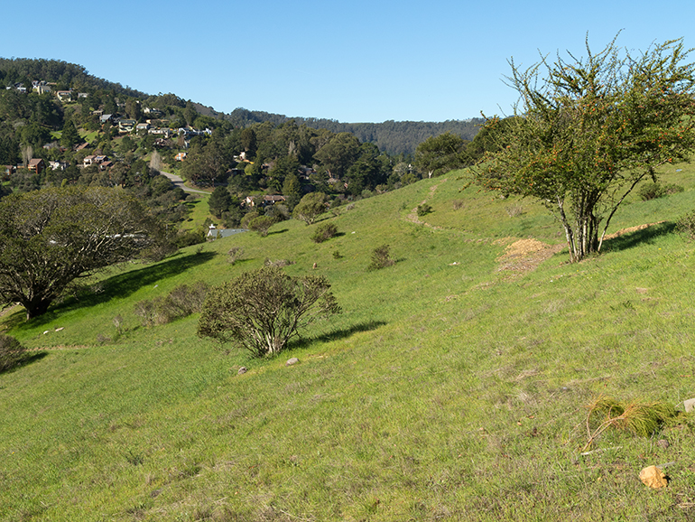 Natural Burial/Green burial space in Mt. Fernwood